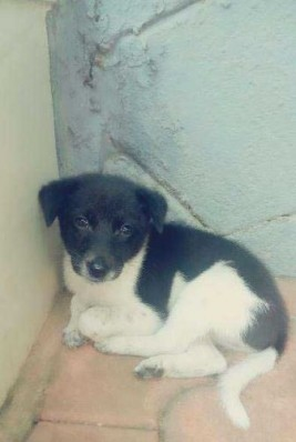 Dog For Sale In Pathanamthitta