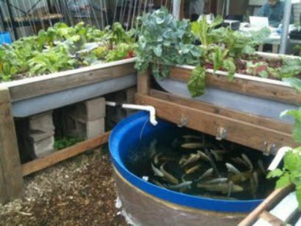 Aquaponics systems for sale at thrissur thrissur animal for Aquaponics systems for sale